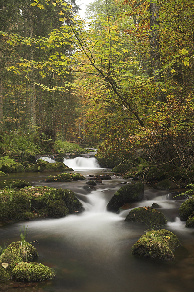 Landschaftsfotografie am Waldbach