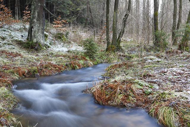 Urselbach oberhalb von Oberursel im Taunus mit Schnee, Moos und Laub, Hessen, Deutschland