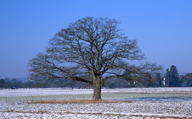 analoge-fotografie-baum-winter